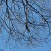 Im Abstieg steigen aus dem Wald eine Menge Vögel - kennt jemand die Art?