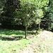 Man bleibt auf dieser Höhe in der Wiese und wandert zum nächsten Bach hinter. Auch dort befand sich ein Staubecken, dieses ist sogar heute noch zu sehen. Der Urgraben floss aus SSO hinein und nach SSW wieder heraus.