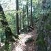 Das alles ist noch heute gut zu sehen, allerdings ist die Eintiefung in den Fels heute natürlich von Sedimenten, vom Waldboden und von Blättern verfüllt. Heute ist's ein Wanderweg.