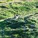 Marmotta nei pressi della Bergst. Languard