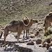 Incontri lungo la valle di Oulilimt...... Qui d'estate si insediano temporaneamente i nomadi d'Ait Atta e delle montagne del Saghro