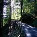 Aufstieg im Wald Richtung Stoos