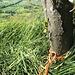 Einer der Bäume für die Standsicherung