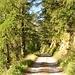 Für eine Stunde geht es über eine Fahrstrasse, jedoch durch einen malerischen Wald.