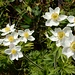 ... zu diesen noch frischen Blumen ...