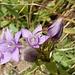 mit schöner Blumenpracht 1