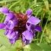 mit schöner Blumenpracht 2