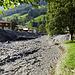 Braune Fluten in Weisstannen