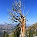 Dead tree on my way down