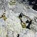 Blick zurück: Aus dem Quergang bin ich über diese guten Felsen aufgestiegen. Aber schon vorher sind mehrere Varianten möglich.