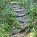 verwilderte Stufen