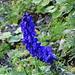 ein weiterer blauer Farbtupfer