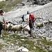 <b>Ho il piacere di assistere alla transumanza di un piccolo gregge di pecore guidata da un giovane pastore che attira le bestie con ripetuti versi gutturali e offrendo loro… manciate di segatura di legno. </b>