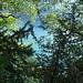 Bäume über dem Walensee