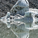 Adlerauge – eiskalt, gespiegelt (Foto [U sglider])