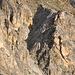 """Das """"Gässi"""", 20Min oberhalb der Turtmannhütte, gilt als Schlüsselstelle dieser Tour (T3+). Zunächst führt ein Zigzag-spur über dem Schutt in diesem Couloir, dan geht es nach rechts mit Drahtseile gesichert auf die Felswand, und dann halbwegs dieser Feldwand über dem Band zur Ausstieg."""
