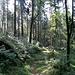 Es folgte ein langer und steiler Abstieg durch den Wald, runter bis zum Punkt 741