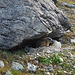 I spotted this marmot near Lai Pintg.