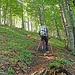 Steiler Weg durch lichten Buchenwald