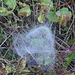 Spinnennetz III