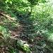 Il magnifico sentiero che sale all'Alpe Pianaccio.
