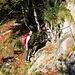 Un tratto attrezzato con cavi e catene, ne abbiamo apprezzato la presenza in discesa quando, in ombra, le rocce erano piuttosto scivolose.