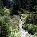 En dessus de Ravouéné. Quand le sentier semble fusionner avec l'ancien bisse des Audannes.