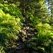 Traumhaft schön durch den Grüenwald