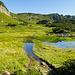 Und jetzt geht's mitten durch den Sumpf? Diese schwimmtechnische Schlüsselstelle lässt sich glücklicherweise linksseitig umgehen. Bei zweimaligem Schauen entdeckt man schon die Sunniggrathütte.