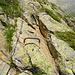 Einige steile Stellen sind mit Trittbügel ausgestattet
