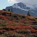 Herbstlich gefärbte Polster und Blaubeerstauden.
