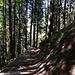 Auf dem schönen Waldweg gehts wieder hinunter nach Engelberg