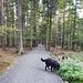 Auf der anderen Seite gehts wieder gerade runter. Der Weg ist jetzt etwas angenehmer aber irgendwie passt diese Geometrie nicht in den Wald...