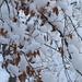 letzte Blätter unterm Schnee