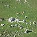 Meglisalp gesehen vom Bötzelchopf
