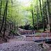 Direkt nach dem Parkplatz in Gibswil, biegt man in den märchenhaften Wald hinein.