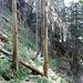 Immer wieder muss man umgestürzte Bäume übersteigen.