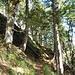 Nach etwa zweieinhalb Stunden Gehzeit, in der man den Berg immer zur Linken hat, steigt der Pfad nach einer etwas engeren Rechtskurve zu einem felsigen Bergsporn an.  Kurz nach der Linkskehre an diesem Bergsporn (nicht im Bild) zweigt auf dem kleinen Plateau rechter Hand ein (durch den hohen Pflanzenbewuchs im Sommer und umgestürzte Bäume zunächst nicht erkennbarer) Pfad nach rechts ab, auf dem man hinunter ins Wilhelmer Tal gelangt.
