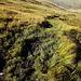 so sah der Weg an vielen Stellen aus, nass und sumpfig, von Kühen zertrampelt und nicht begehbar