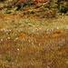 mooriges Gelände, das Wollgras ist fast verblüht