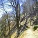 Der Einstieg in den Sentier des Roches am Col de la Schlucht.