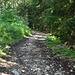 Im Abstieg: Der Weg... oder so...
