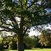 wunderschöner Baum in Newcastle