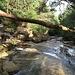 Abstieg im schönen Glen River