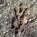 Impronte sulle rive del lago Nero ...Nessie? Chi sa, parli ..