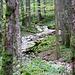 Der mittlere Teil (Ur-Wald) der Combe Grède.