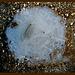"<b>""Frozen Tümpel Art Collection®"" by Shepherd, Item 004.</b><br /><br />"