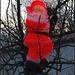 Wenn die Nikläuse die Bäume hochklettern, dann kann mit gutem Wetter gerechnet werden!