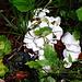 weiße Pilze im Wald