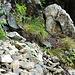interessanter Weg über Stock und Stein